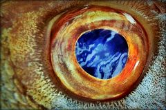 Fish-eye