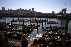 Fishermans Wharf 1