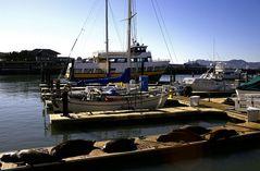 Fishermans Wharf 3