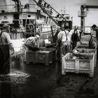 fishermen 13