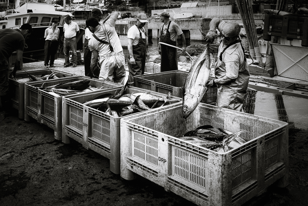 fishermen 14