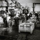 fishermen 16