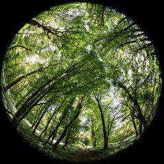 Fisheye im Wald