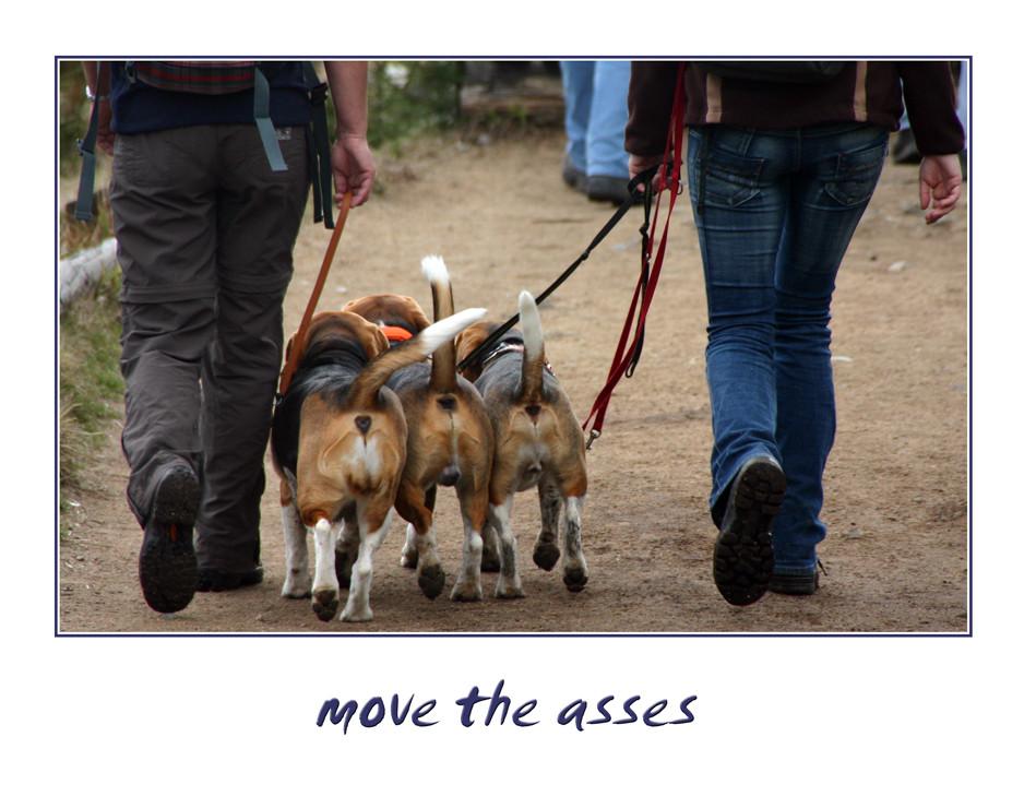 five asses