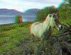 Fjordpferd am Fjord
