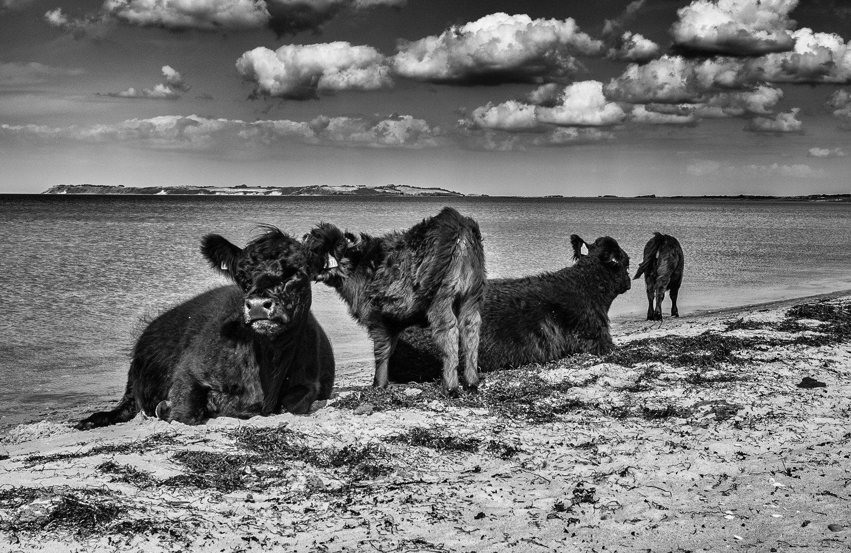 FKK-Strand Foto & Bild | natur, strand, fkk Bilder auf