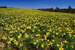 Flächendeckendes Gelb