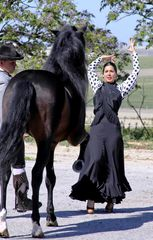 Flamenco mit tanzendem Pferd