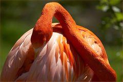 """Flamingo 1"""