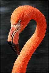 ~ Flamingo ~