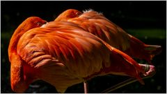 Flamingo, 4