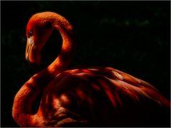 Flamingo, 6