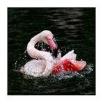Flamingo-Badetag -4-