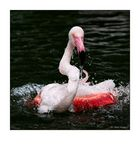 Flamingo-Badetag -5-