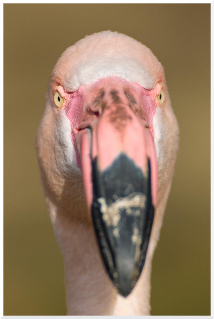 Flamingo Eyes