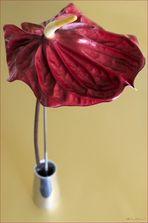 Flamingo Flower 2