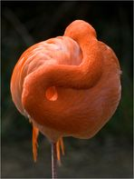 flamingo-gymnastik ...