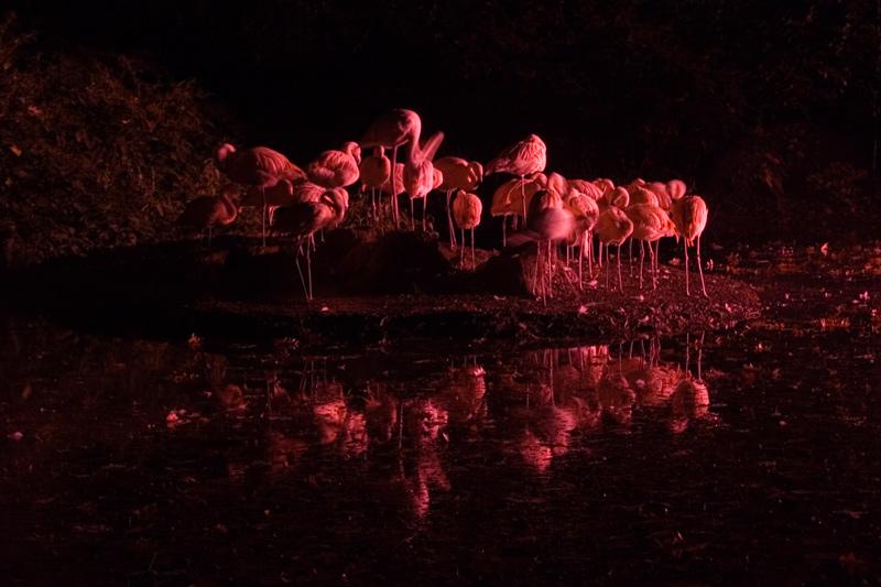 Flamingo Hill