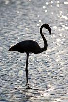 Flamingo im Gegenlicht