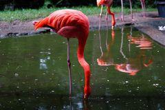 Flamingo im Rostocker Zoo