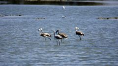 Flamingo Kinderstube