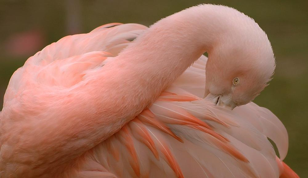 Flamingo mal anders
