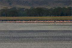 flamingo mikro