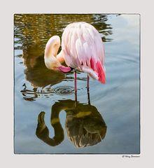 Flamingo mit Täuschung .....
