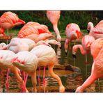 Flamingo World