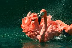 Flamingoaction