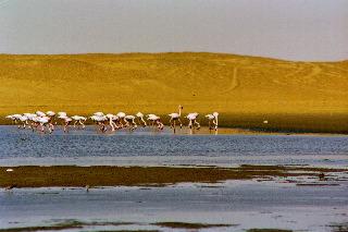 Flamingoes Namibia