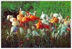 Flamingogruppe
