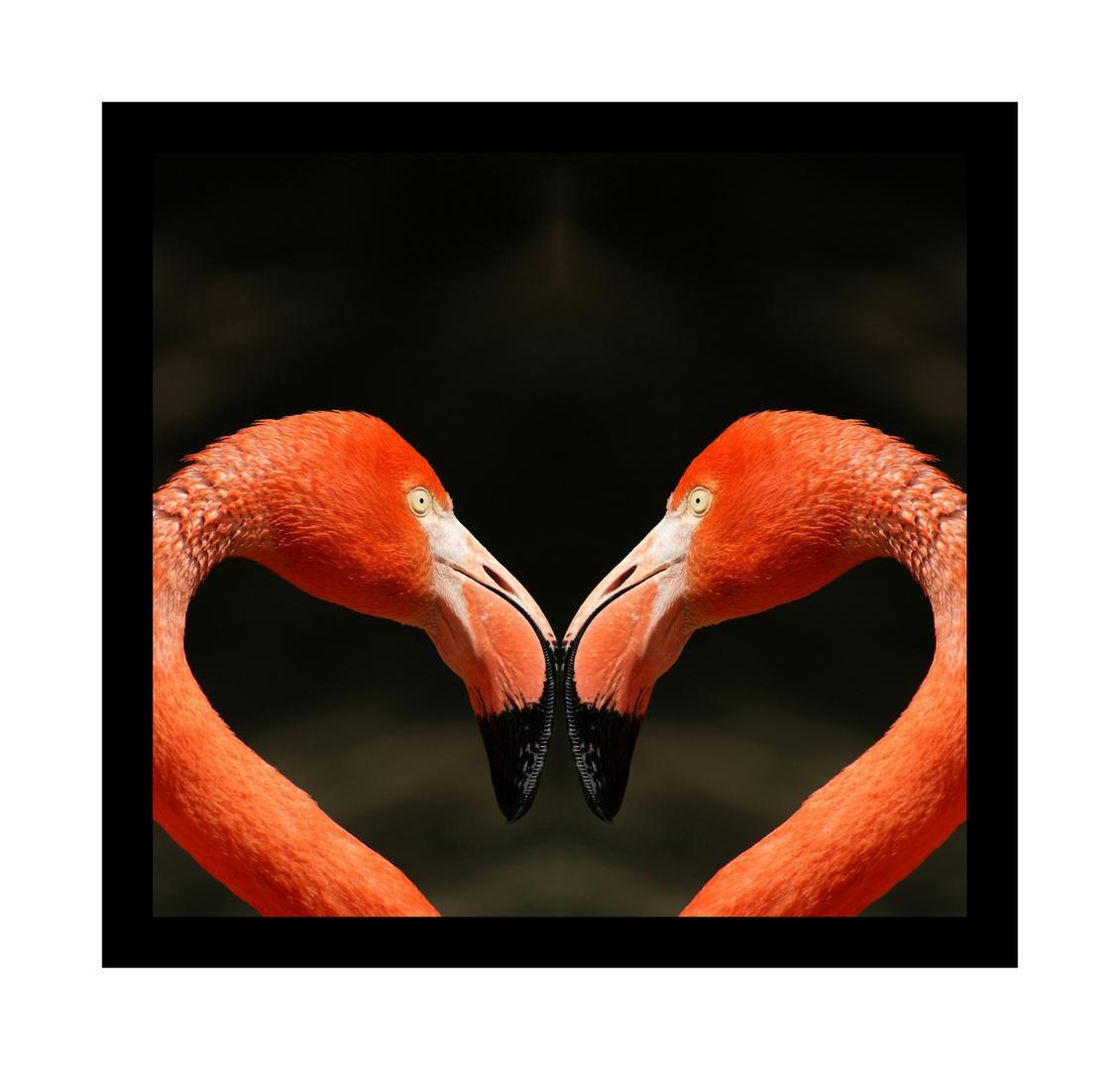 Flamingoherz