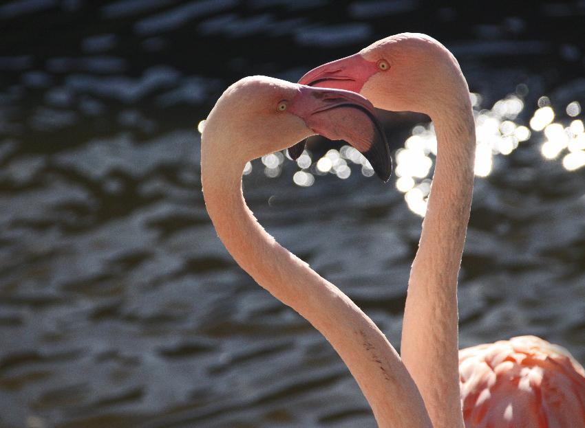 Flamingoherz :-)
