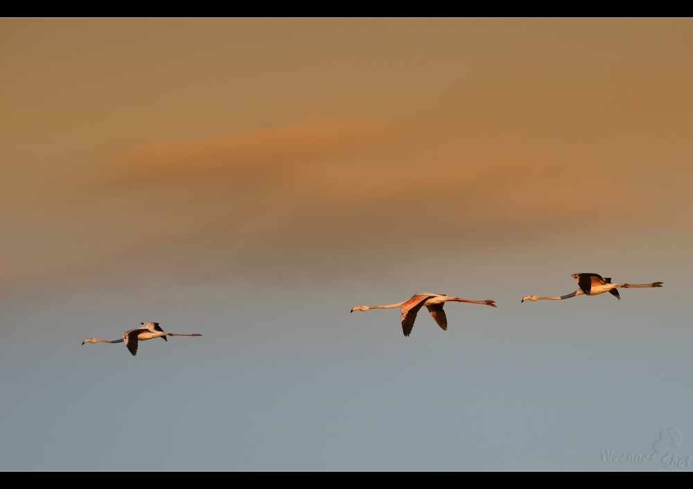 Flamingo_Himmel