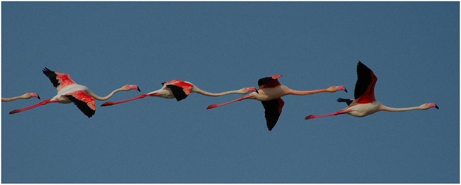 Flamingokette