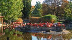 """Flamingoland in Dresden """"vom Feinsten"""" wie ich finde..."""