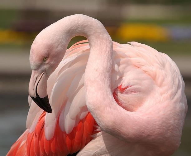 """Flamingoroad"""