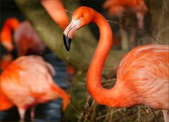 [ flamingos.. ]