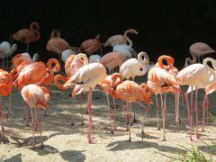 Zoo Hellabrunn