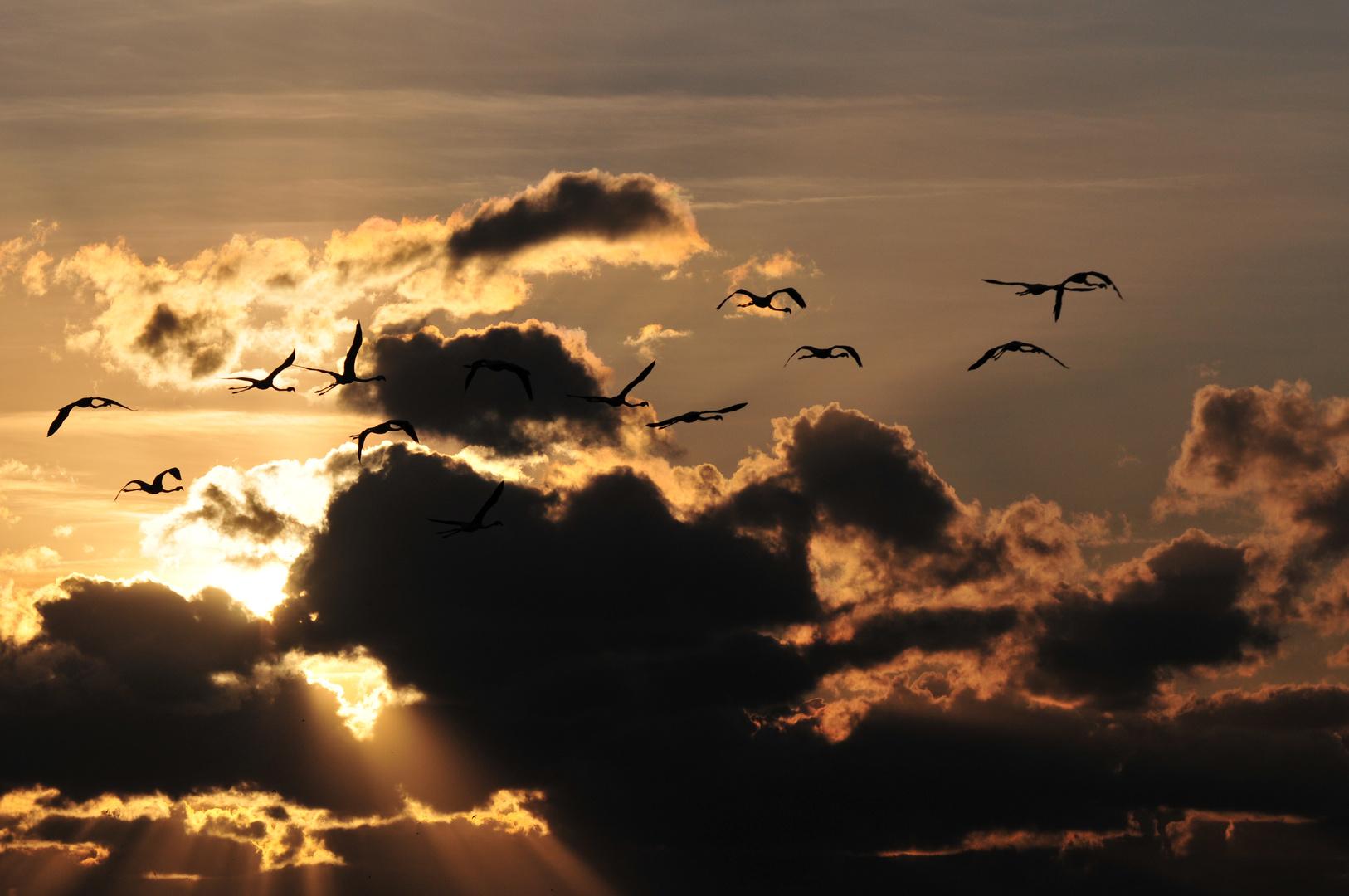Flamingos am Abendhimmel