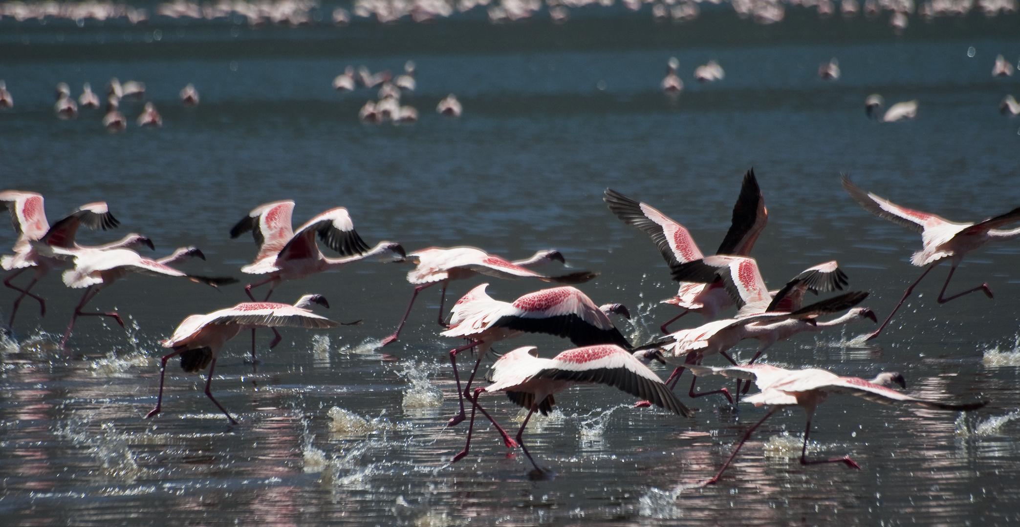 Flamingos am Empakay Krater
