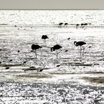 Flamingos am Spätnachmittag