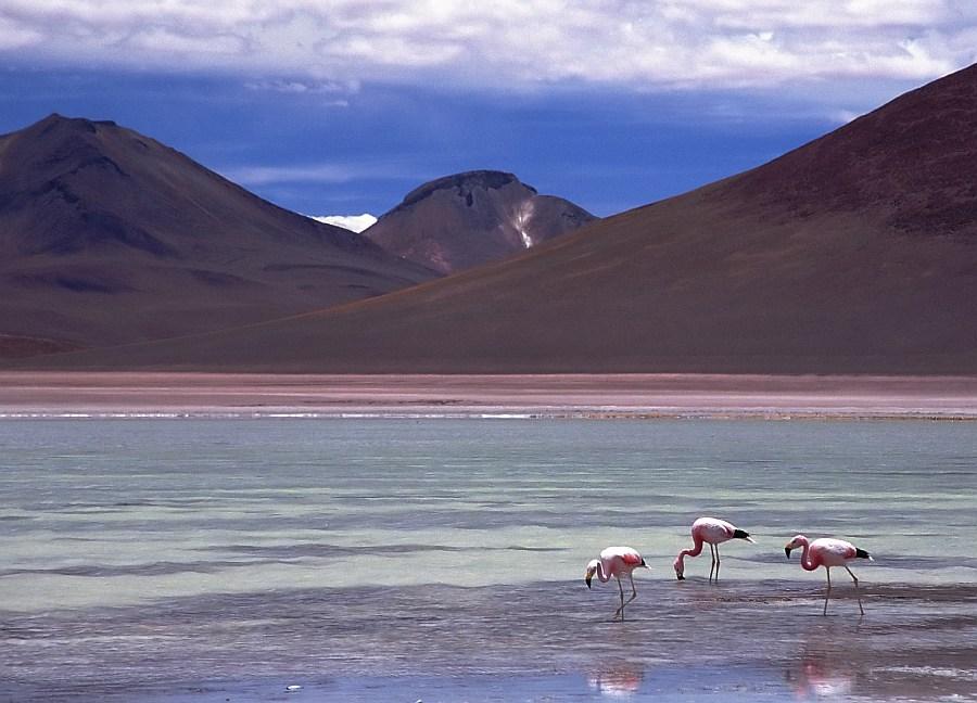 Flamingos auf 4300 m
