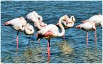 Flamingos !