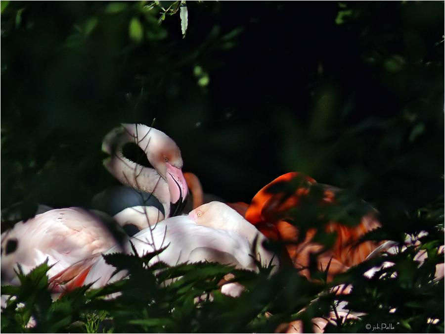 Flamingos digi 01