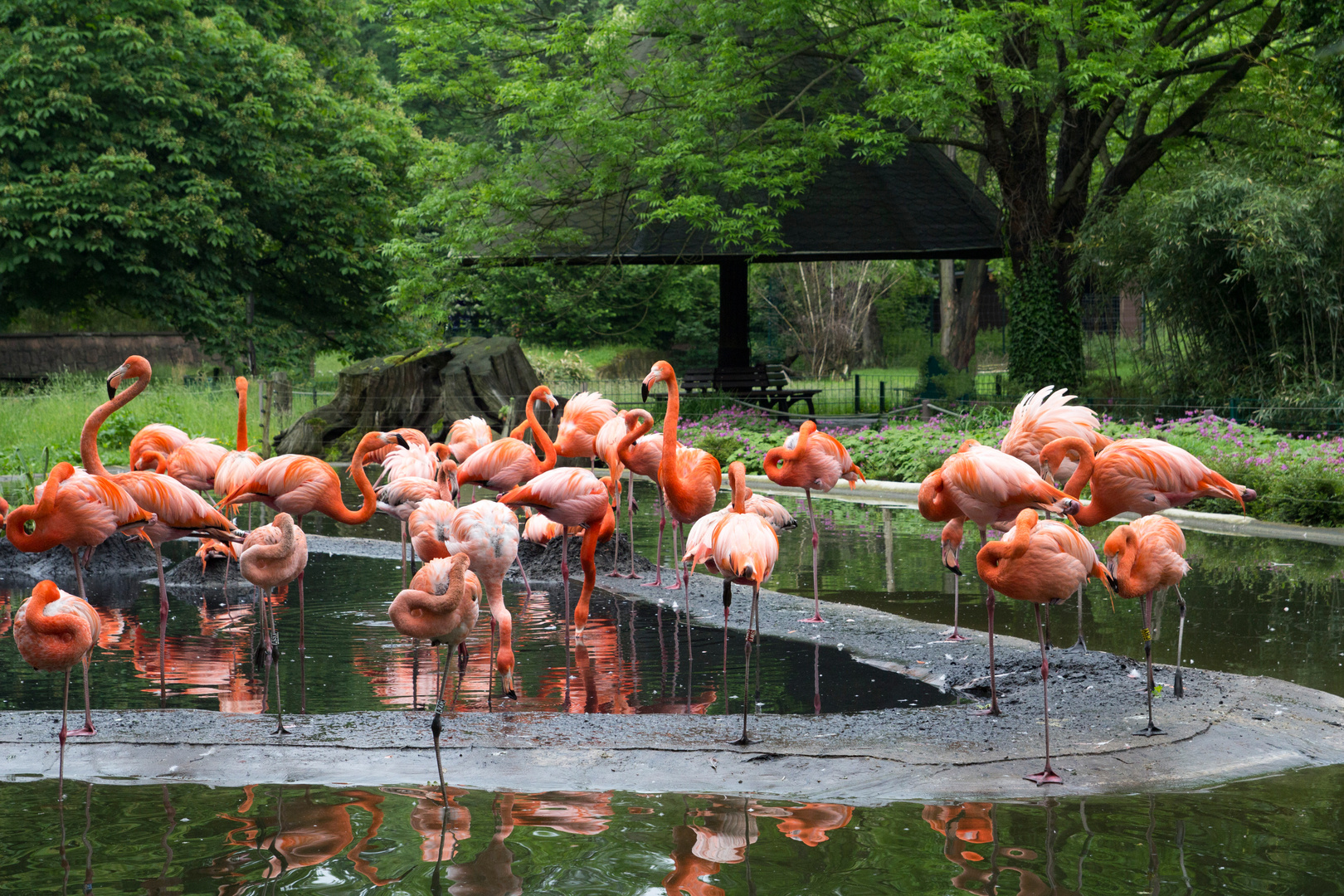Flamingos im Dredener Zoo