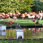 Flamingos im Kölner Zoo