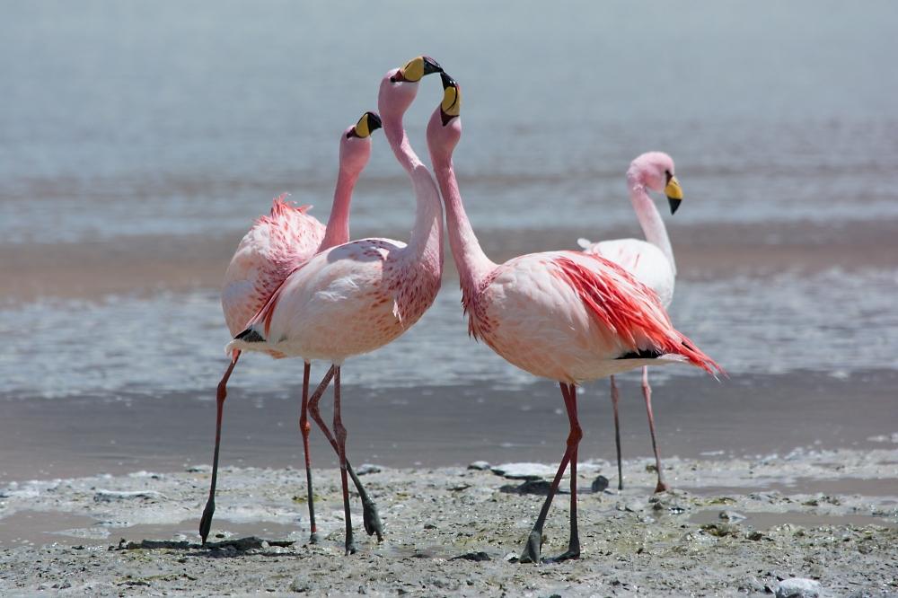Flamingos im Matsch