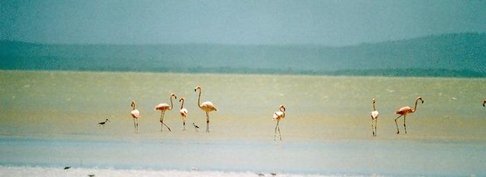 Flamingos in der Laguna de Oviedo